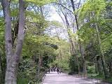 060429-shimogamo-02.jpg