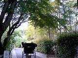 060506-sagano-03.jpg